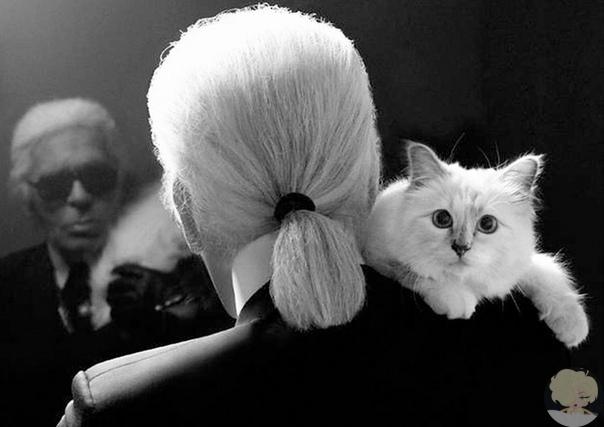 Больше всего Карл Лагерфельд любил свою кошку Шупетт