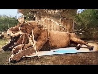 Этот лев съел 49 человек, только когда его убили, люди выяснили, почему он это делал!