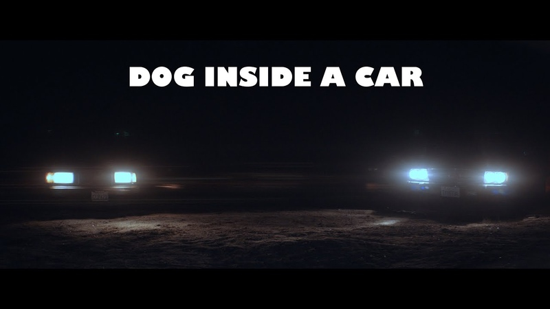 Fell Runner Dog Inside a Car Official Video