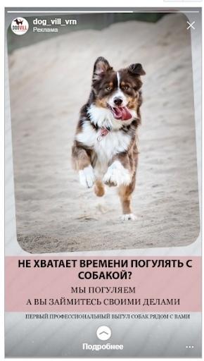 Кейс: продвижение стартапа по выгулу собак, изображение №8