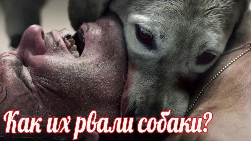 Почему их рвали собаки Бойня у Зеленой Брамы Военные истории Великой Отечественной Войны