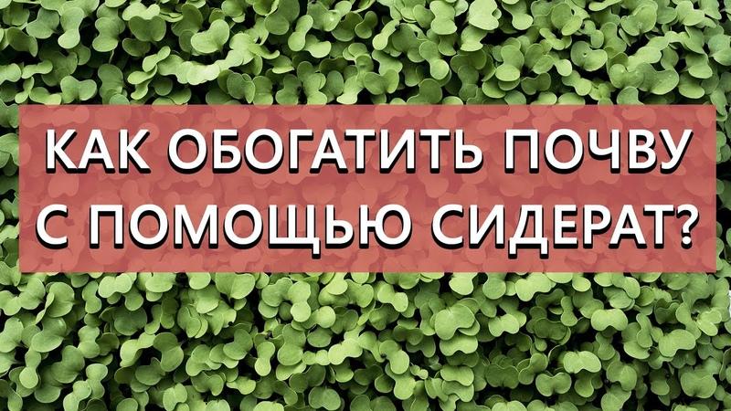 Как обогатить почву с помощью сидерат После каждой культуры свой сидерат! Как выбрать