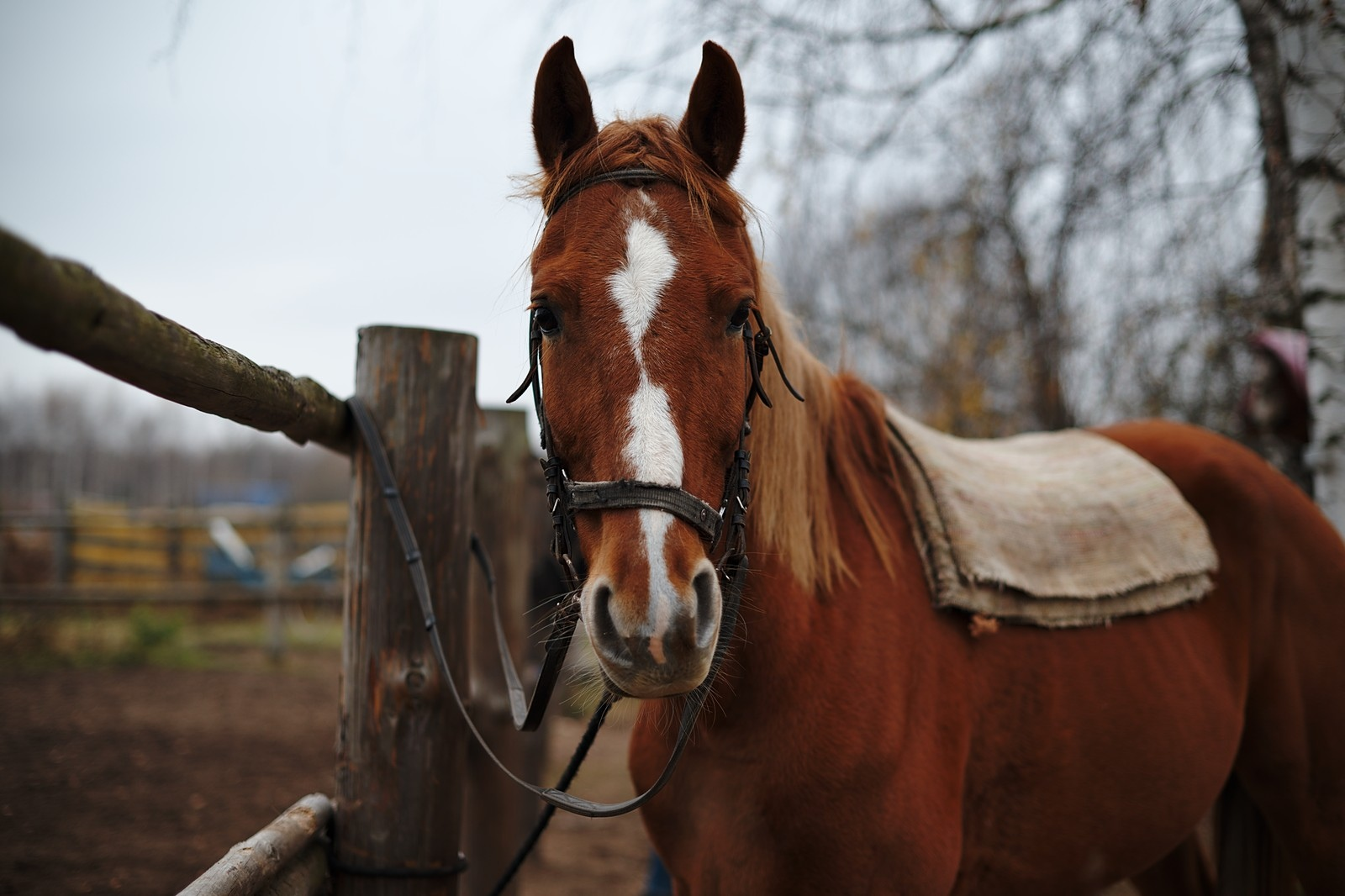 Лошадка Мурзик! Фото Сергея Бессонова