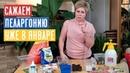 НАЧИНАЕМ ПОСАДОЧНЫЙ СЕЗОН 2020 С ПЕЛАРГОНИИ Посадка в стаканчики и торфяные таблетки Садовый гид
