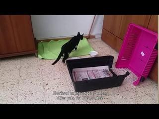 Chertik's story - Injured kitten finds a home! - История раненого котёнка который нашёл свой дом