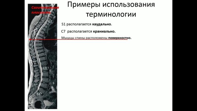 Оси и плоскости Общая анатомическая терминология Изранов В А