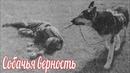 История собачьей верности , первых дней великой отечественной войны.