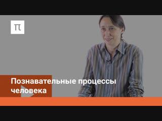 Познавательные процессы человека (1/15) психология познавательных процессов мария фаликман (лекции постнаука)