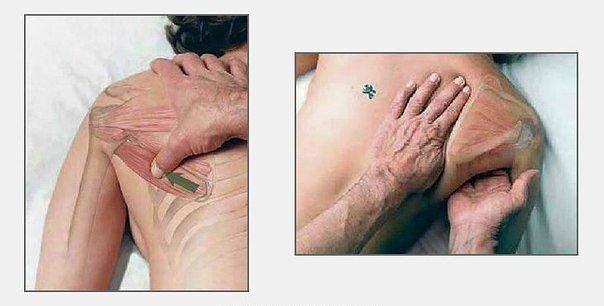 Как делать массаж: 7 картинок для понимания смысла движений рук Массажист мнёт наши спины, плечи, шеи и прочие части тела не хаотично, а согласно определённой схеме. Направление движения рук