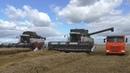 2 новых CLAAS TUCANO 450 в полях Чувашии на уборке пшеницы