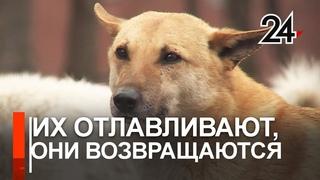 Госконтракт на 615 000 руб. заключил исполком на отлов животных без хозяев в с. Шигали