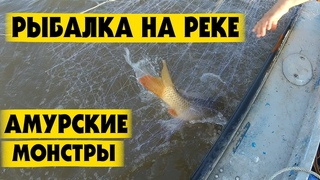Рыбалка на Амуре Летом. Верхогляд Сазан. Рыбалка сетями