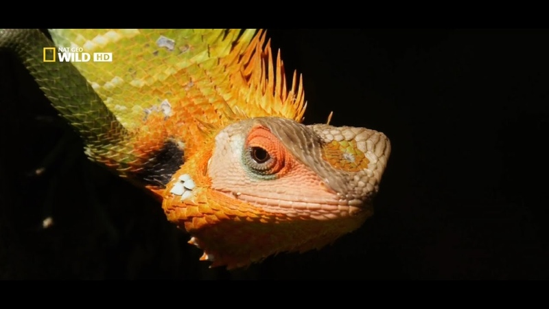 Дикая Шри Ланка Облачный лес Дикая природа Шри Ланки Документальный фильм National Geographic