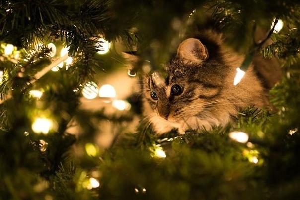 Кешка и Новый год Деда Мороза, который подобрал замерзающего Кешку, оказывается, зовут Деда Паша, это малыш запомнил сразу. Были ещё Мама Лена,Папа Лёша и, самое главное, Варя,смешная девчушка,
