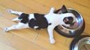 Самые смешные животные / Приколы с котами и собаками 2021 2