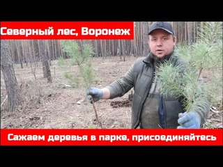 Посадили деревья в парке Северный лес в Воронеже во время субботника. Передаю эстафету ВАМ!