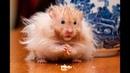 Самые смешные животные в мире/ Приколы с животными 2021/ Дети и животные смешное видео