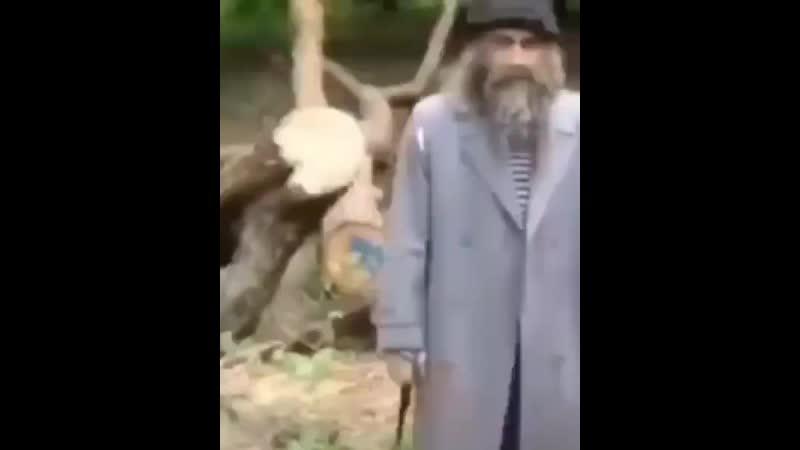 Это же мой гриб