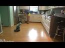 Самый невозмутимый кот...