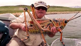 Они вообще с нашей планеты? Самые огромные насекомые в мире!!