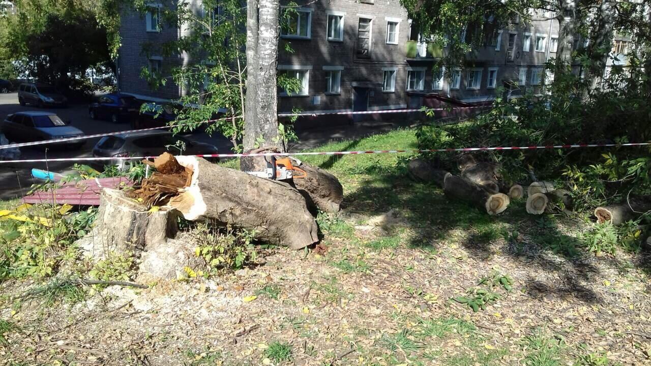 Спиливание аварийных деревьев улица Кольцова дом 22