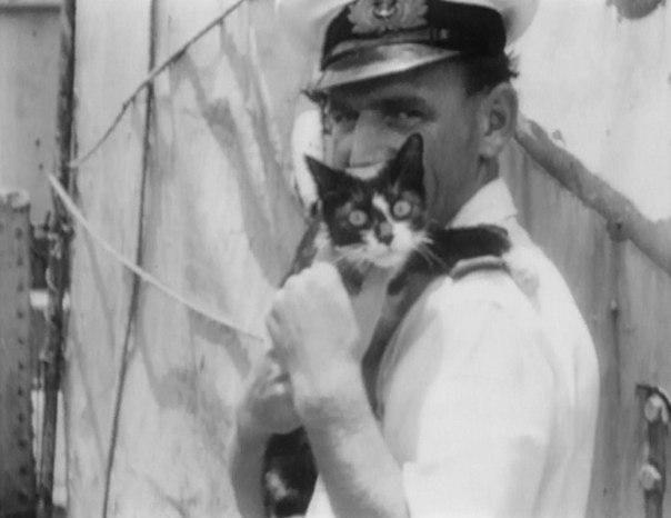 Во время Второй Мировой войны немецкие матросы пронесли на борт линкора «Бисмарк» кота Линкор был затоплен британской эскадрой через 9 дней после выхода в море, спаслись лишь 115 из 2200 членов