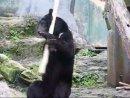 панда кунфу 3