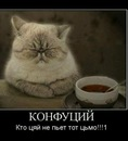 Фотоальбом Олега Тихоновского
