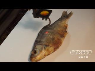 Лазерная гравировка на рыбе