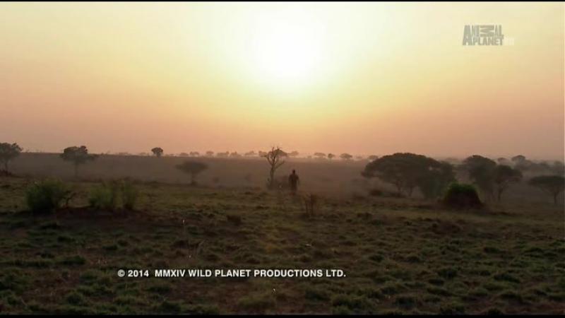 Animal planet Большие и страшные Крокодилы людоеды
