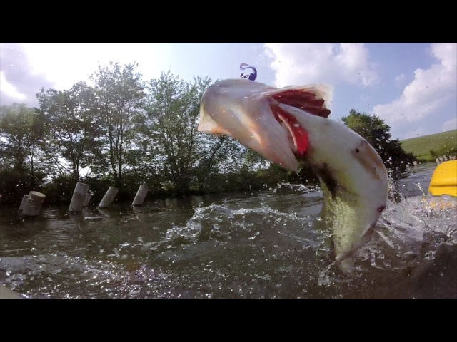 GoPro: Wilfredo Lugo's Crazy Kayak Fish - Best Catch June Winner