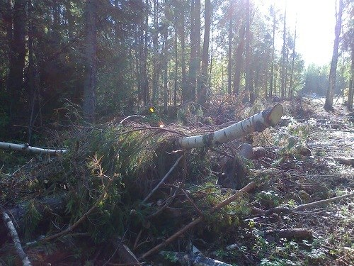 Встреча с призраком в Шабалинских лесах Вятского края