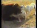 Гуль-донги и Мишка