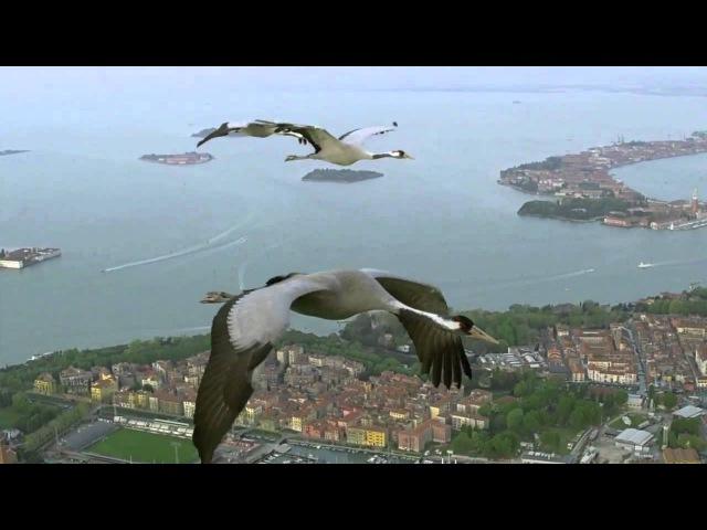 HD BBC Earthflight Cranes Over Venice Italy