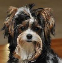 Итальянские корма для собак: обзор, составы, отзывы