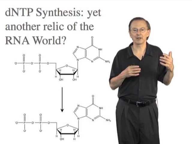 The RNA World Hypothesis Jack Szostak Harvard HHMI