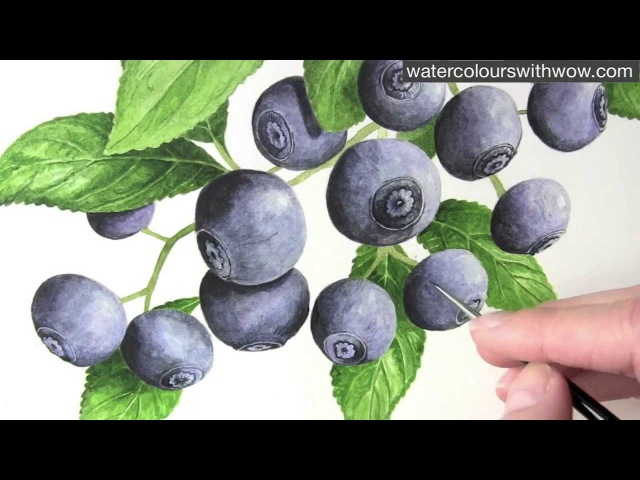How to paint fruit in watercolor blueberry 'bloom' by Anna Mason