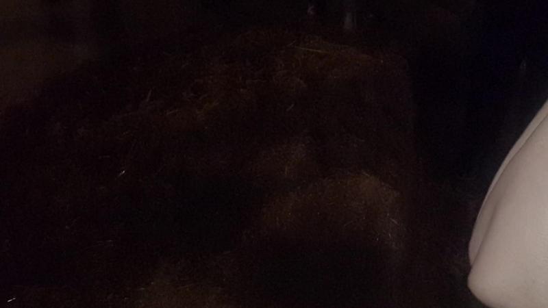 Червятник вермиферма в Коврове