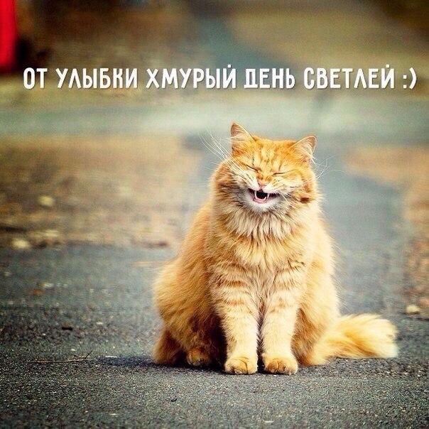 пайл доброе утро и хорошее настроение картинки от кота могут