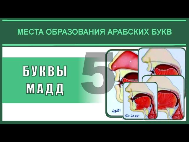 Айман Сувейд 5 Буквы мадд с субтитрами на русском