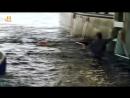 History Акульи пастухи 09 Искупление Реальное ТВ 2012