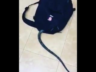 Змея залезла в рюкзак - Веселые Кавказцы