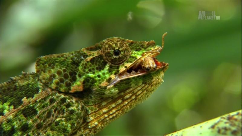 В дебрях Африки 7 серия Мадагаскар Остров чудовищ