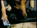 Непосредственные заботы 2004 М Кондрикова научно популярное кино Леннаучфильм