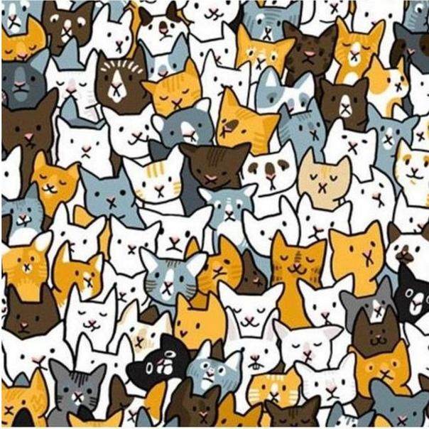 каждом картинки на внимательность найди кота среди сов поможет