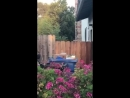 Dog Jumps to Look Over Fence 992064