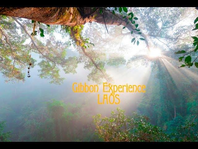 Gibbon Experience adventure Trekking treehouses and ziplines in Nam Kan National Park Laos