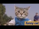Самые смешные видео про кошки и коты Подборка приколов на канале ПРИКОЛЫ ТВ ЛУЧ