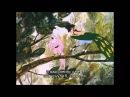 «Волшебная флейта» (The Magic Flute) [опера Моцарта] Часть 1/3