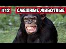 Хохочущая обезьяна эти смешные животные 12 Bazuzu Video ТОП подборка май 2017